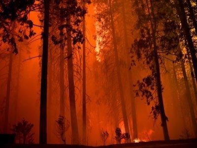 Des arbres sont consumés par l'incendie baptisé French Fire dans la forêt nationale de Sequoia, près de Wofford Heights (Californie), le 25 août 2021 - Patrick T. FALLON [AFP]
