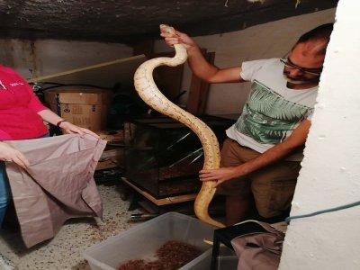 2 serpents découverts dans le logement d'un suspect à Caen. - Police Nationale 14