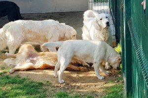 Alençon: Handi'Chiens forme son premier chien d'assistance judiciaire